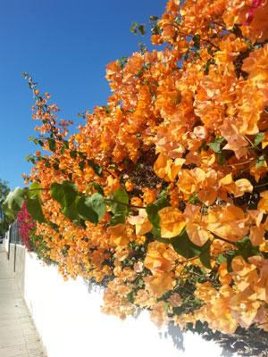 Gran Canaria 10-2014-08