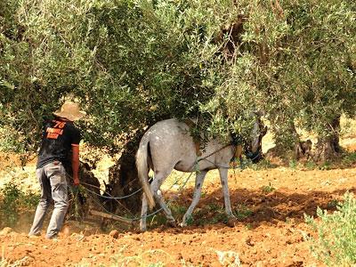 Reisefotos Tunesien - Selima Club 07-2014-34