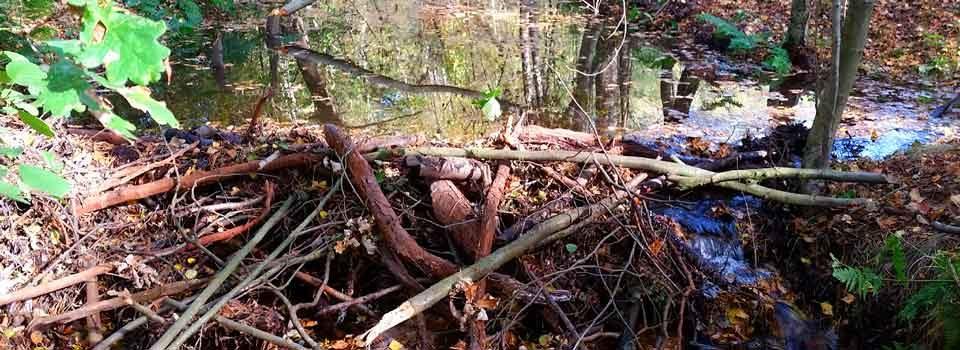 Elmar Storch – Auszug des Seins