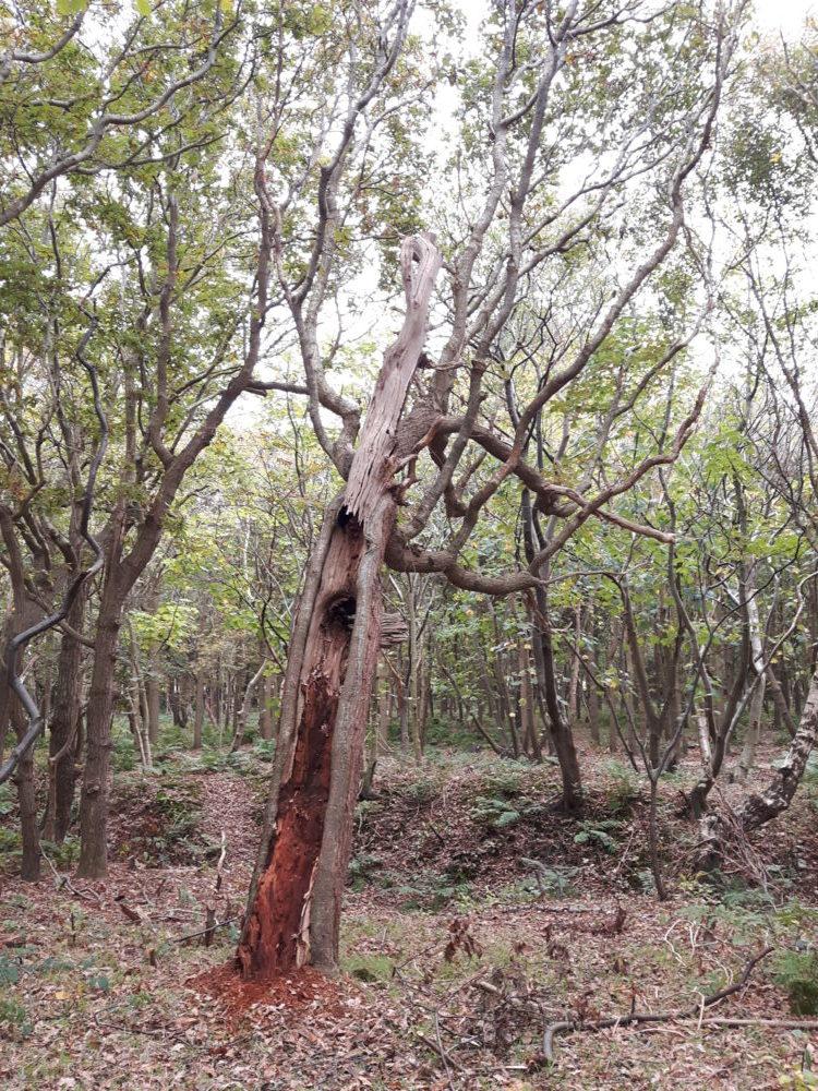 Alternder Baum