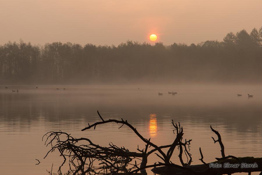 Naturschutzgebiet Diergartscher See zur Morgenstunde