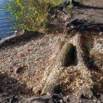 Uferbefestigung Venekotensee